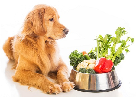 organic pet food is packed with healthy ingredients