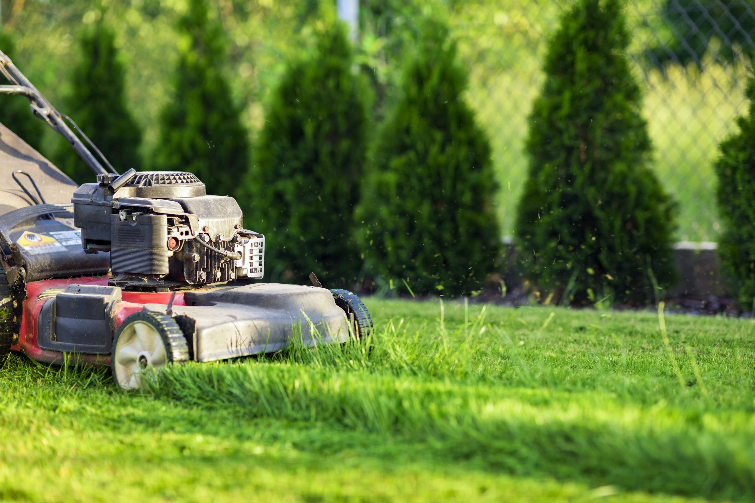 Spring Lawn Care: Getting Ready to Enjoy Your Yard