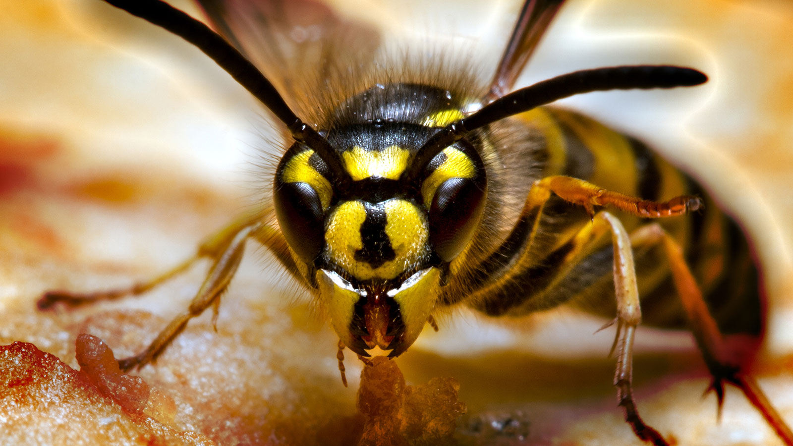 How to Handle Wasps and Hornets